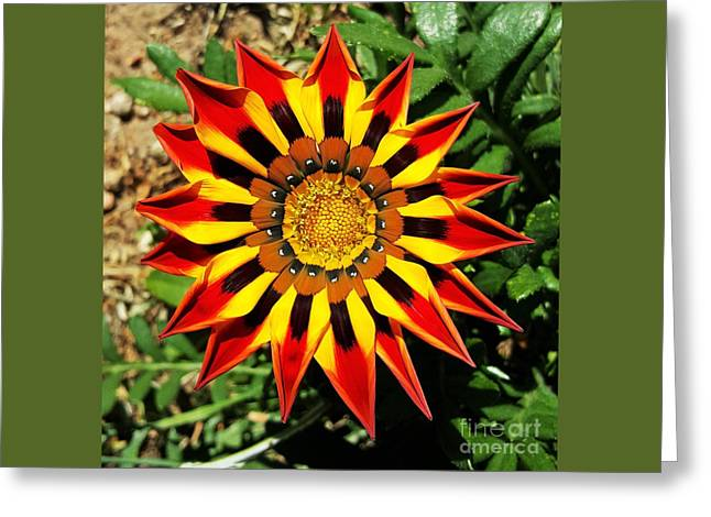 Flower -  Made In Nature Greeting Card by Jasna Gopic