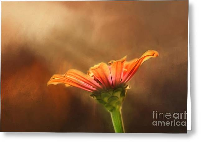 Flower Of Fall Greeting Card by Darren Fisher