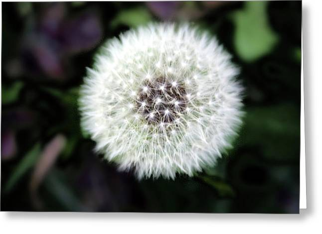 Flower Of Flash Greeting Card by Mark Ashkenazi