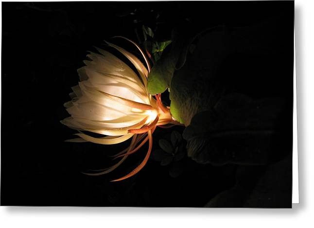 Flower Of The Night 03 Greeting Card