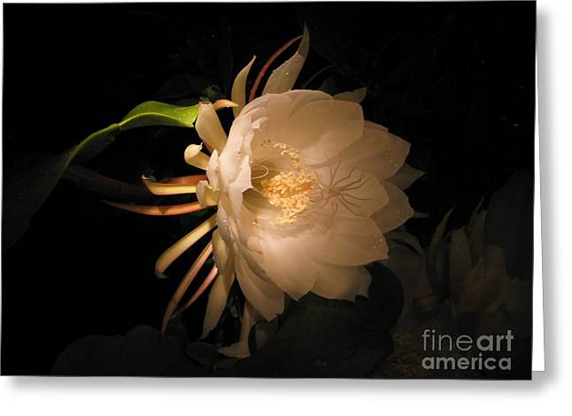 Flower Of The Night 04 Greeting Card