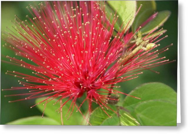 Flower Optics 2 Greeting Card by Debbie May