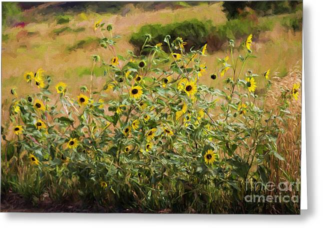 Flower Or Weed? Greeting Card by Jon Burch Photography