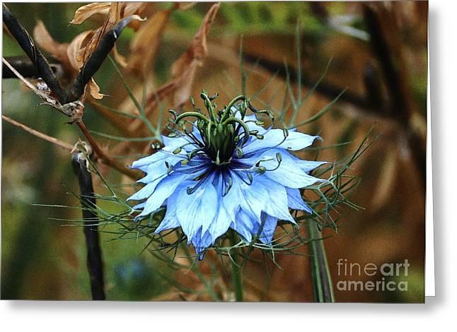 Flower Or Weed Greeting Card