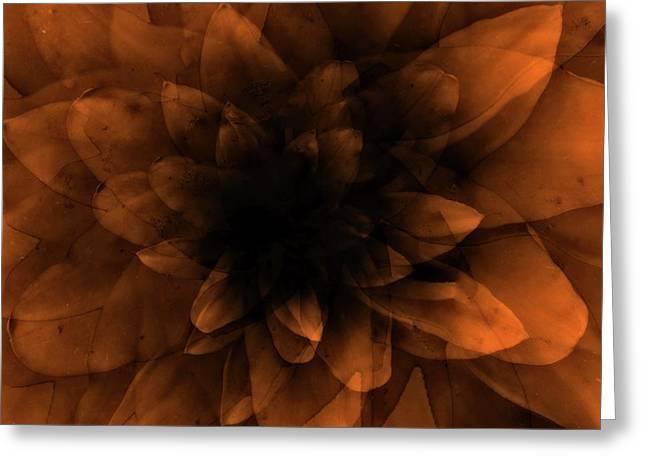 Flower  Orange Greeting Card by Johan Lilja