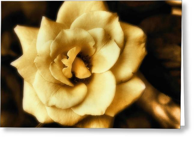 Flower Greeting Card by Gulf Island Photography and Images