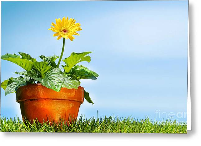 Flower Pot On The Grass Greeting Card