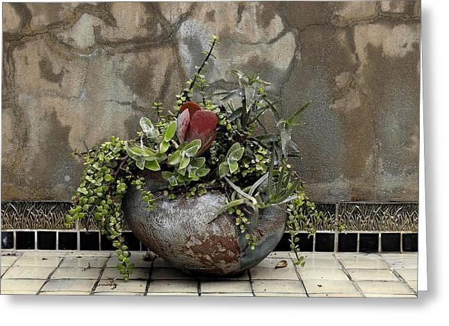 Flower Pot Greeting Card by Viktor Savchenko