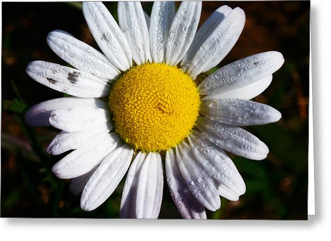 Flower Power Greeting Card by Bill Cannon