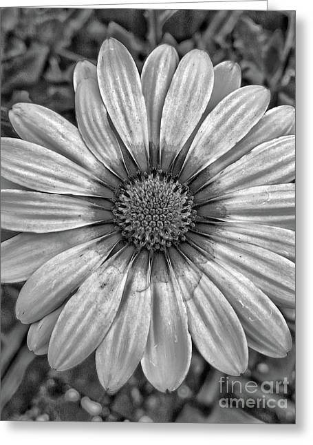 Flower Power - Bw Greeting Card