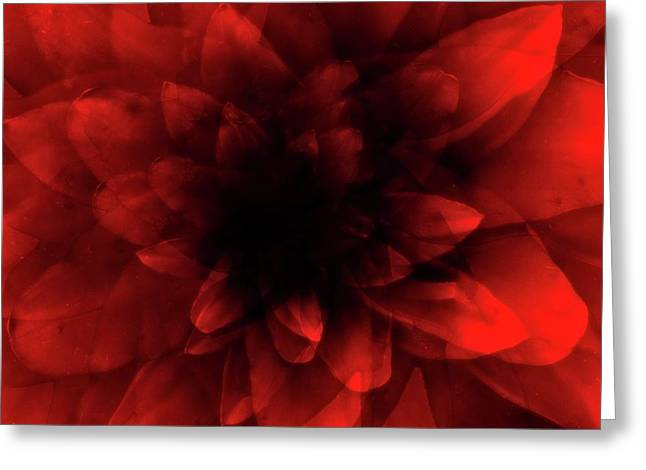 Flower  Red Shade Greeting Card