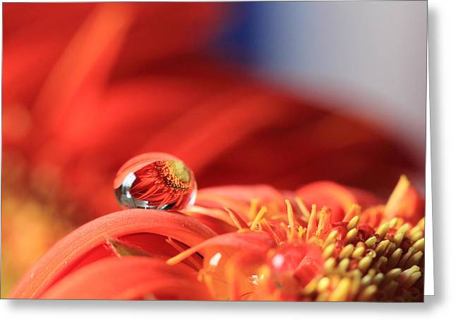 Flower Reflection In Water Drop Greeting Card