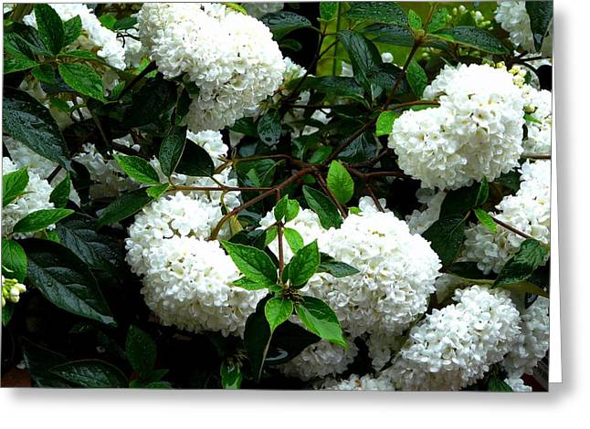 Flower Snow Balls Greeting Card by Valerie Ornstein