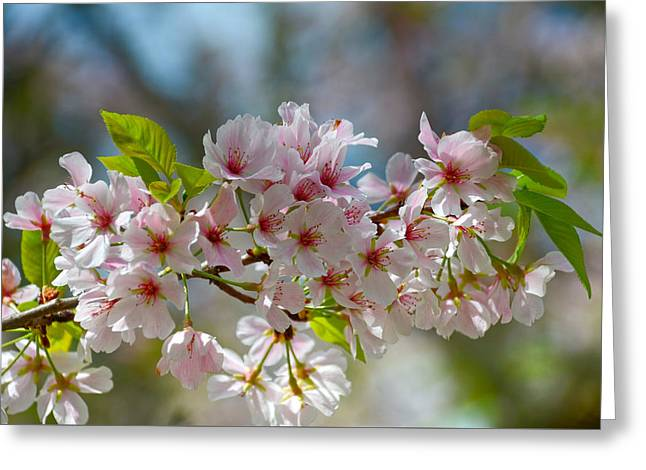 Flower Spray Greeting Card by Linda Brown