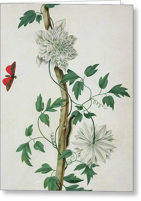 Flower Studies, 18th Century Greeting Card by Peter Brown