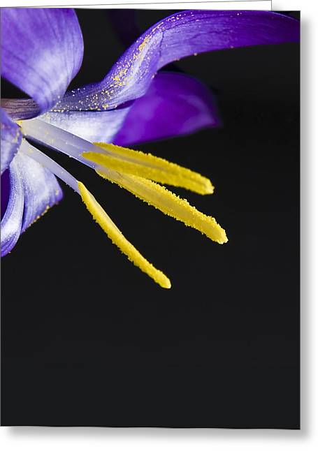 Flower Greeting Card by Svetlana Sewell