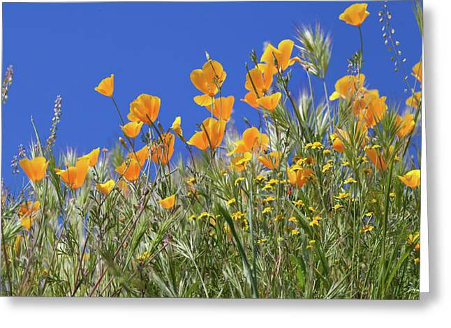 Greeting Card featuring the photograph Flower Trail Diamond Valley Lake by Cliff Wassmann