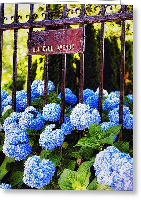 Flowerheads  In Newport Greeting Card by George Oze