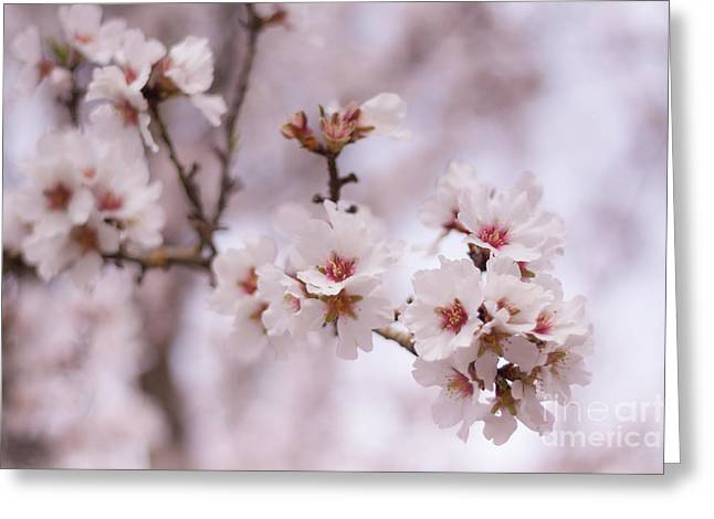 Flowering Branches Greeting Card by Ana V Ramirez