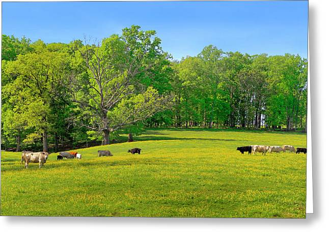 Flowering Cow Pasture Greeting Card
