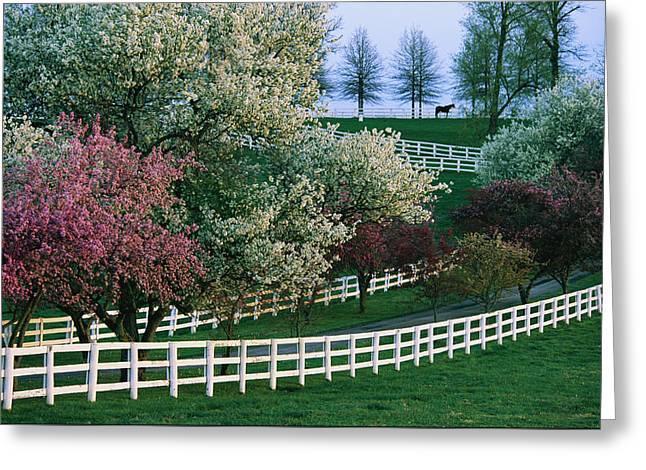 Flowering Crab Apple Trees Bloom Greeting Card