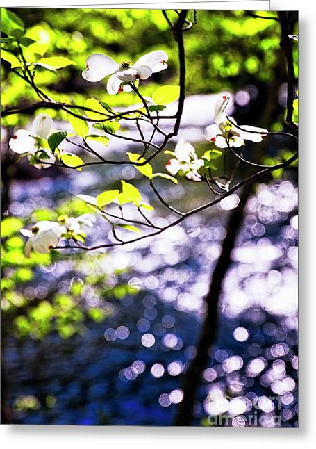 Flowering Dogwood Tree Along A River Greeting Card by George Oze