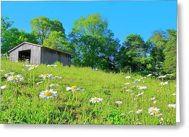 Flowering Hillside Meadow - View 2 Greeting Card