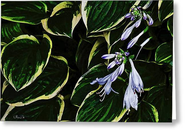 Flowering Hosta Greeting Card