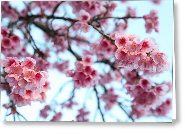 Greeting Card featuring the photograph flowering of the almond tree, Jerusalem by Yoel Koskas