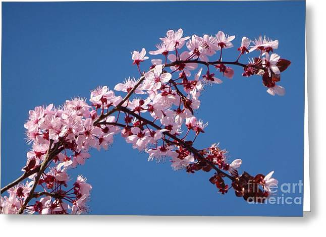 Flowering Of The Plum Tree 4 Greeting Card by Jean Bernard Roussilhe