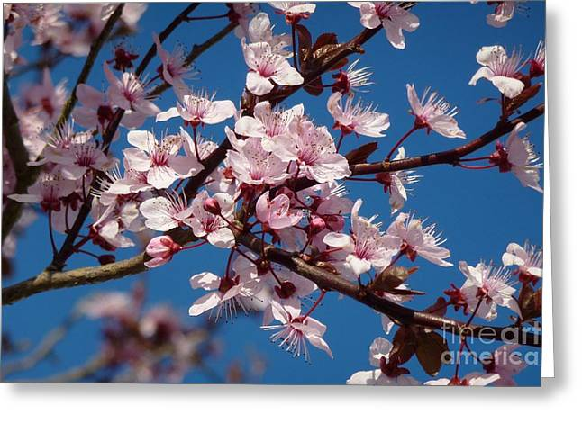 Flowering Of The Plum Tree 5 Greeting Card by Jean Bernard Roussilhe