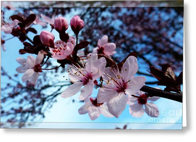 Flowering Of The Plum Tree 6 Greeting Card by Jean Bernard Roussilhe