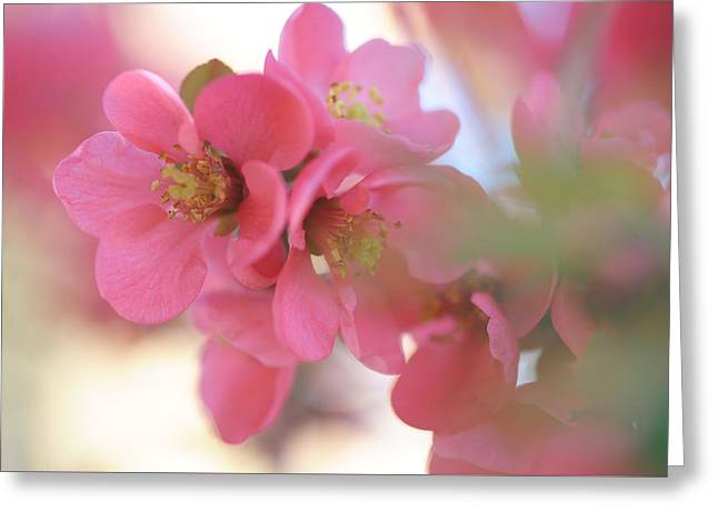 Flowering Pink Japanese Quince Greeting Card by Jenny Rainbow