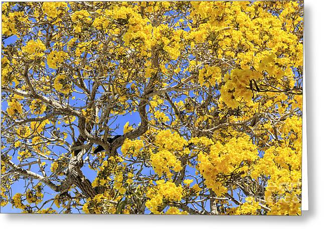 Flowering Tabebuias Tree Greeting Card by Edward Fielding