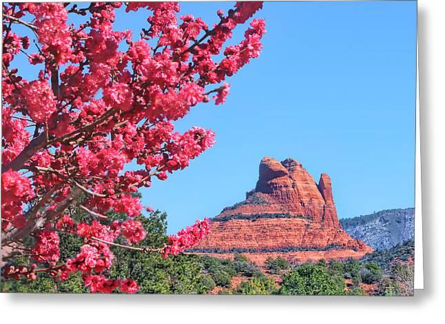 Flowering Tree - Sedona Red Rock Greeting Card
