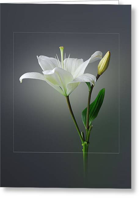Flower..one Greeting Card by Deepak Pawar