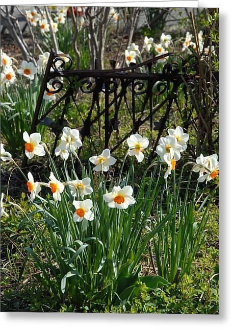 Flowers 157 Greeting Card by Joyce StJames