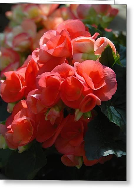 Flowers 160 Greeting Card by Joyce StJames