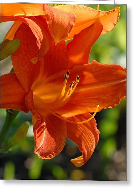 Flowers 190 Greeting Card by Joyce StJames