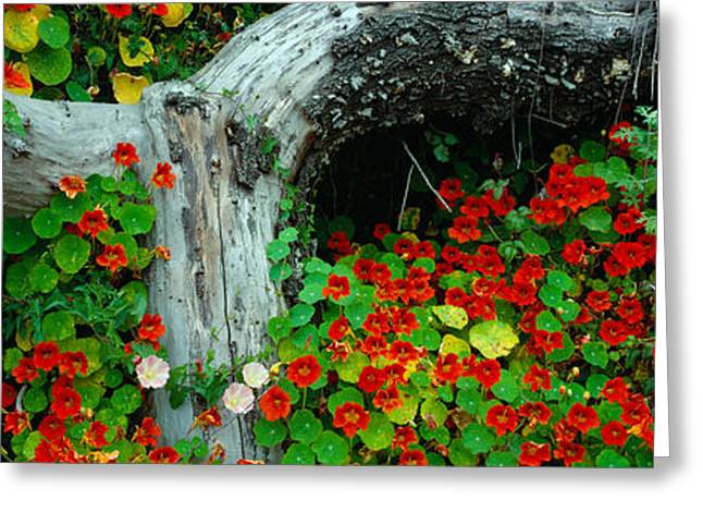Flowers And Log, Route 1, Northern Greeting Card by Panoramic Images