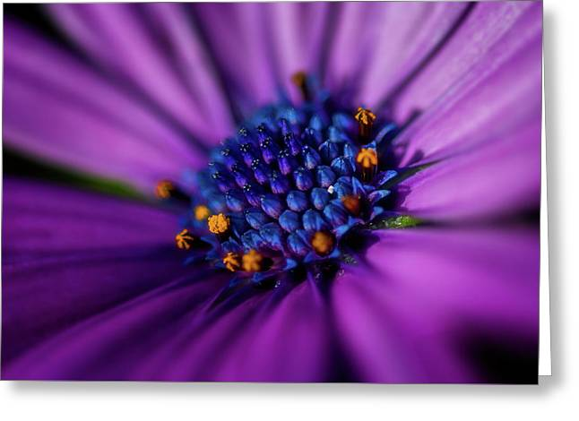 Greeting Card featuring the photograph Flowers And Sand by Darren White