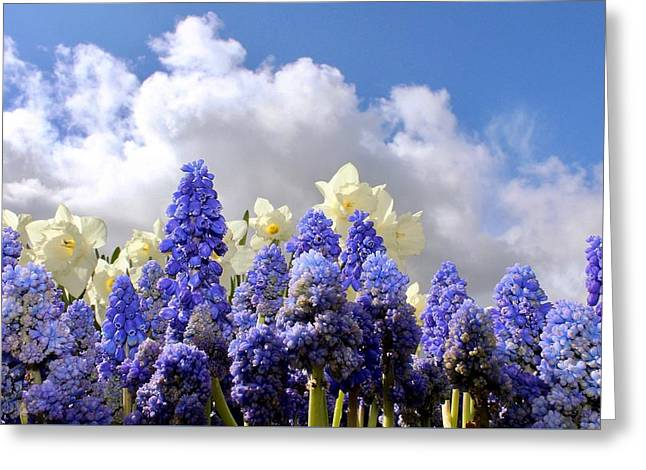 Flowers And Sky Greeting Card