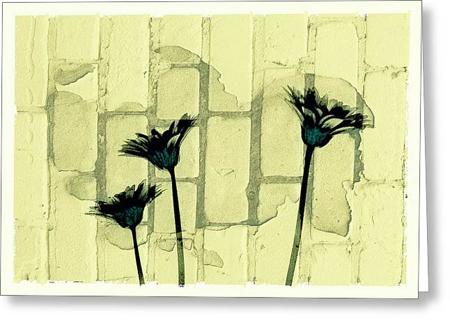 Flowers And The Brick Wall Greeting Card by Susan Stone