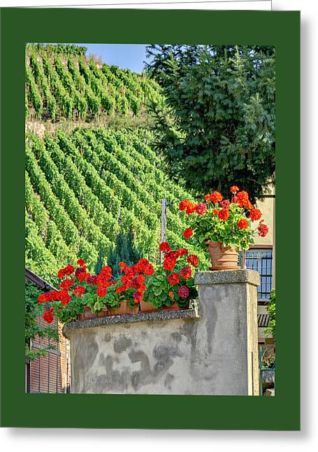 Flowers And Vines Greeting Card by Alan Toepfer
