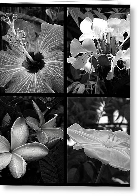 Flowers Greeting Card by Andre Panatto