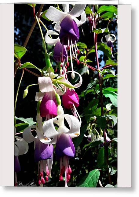 Greeting Card featuring the photograph Flowers by Bernd Hau