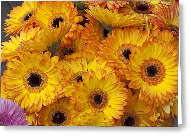 Flowers Bo71 Greeting Card by Charles  Ridgway