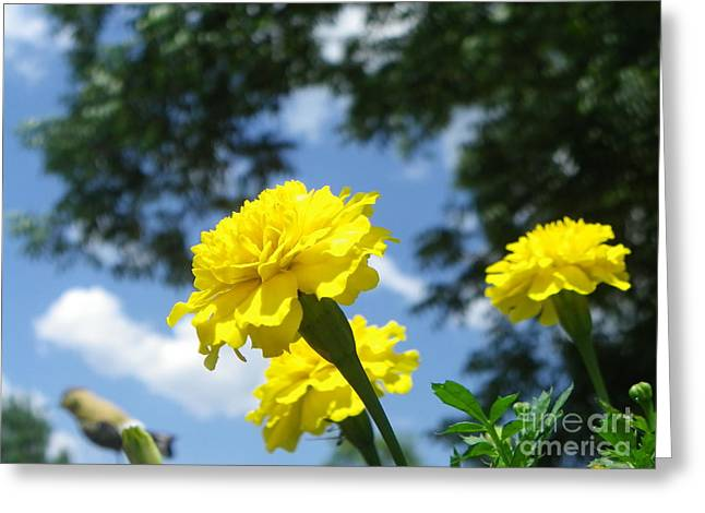 Flowers Greeting Card by Bobby Hammerstone