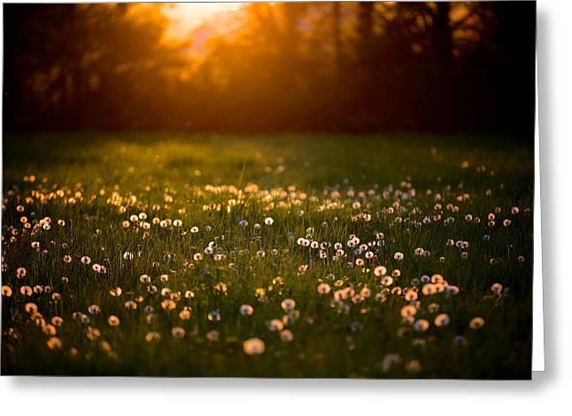 Flowers  Greeting Card by Evgeny Vasenev