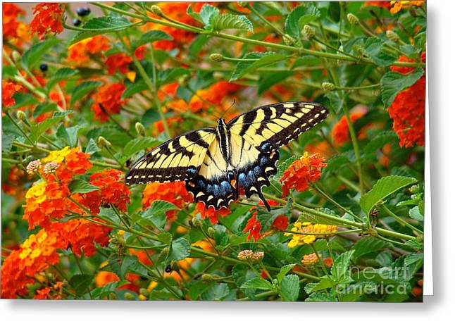 Flowers For Butterflies Greeting Card